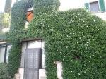 Firenze Home